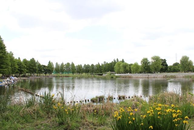 舎人公園11