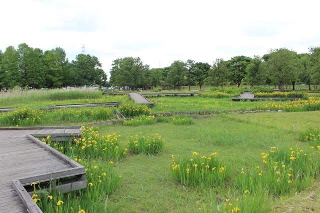 舎人公園7