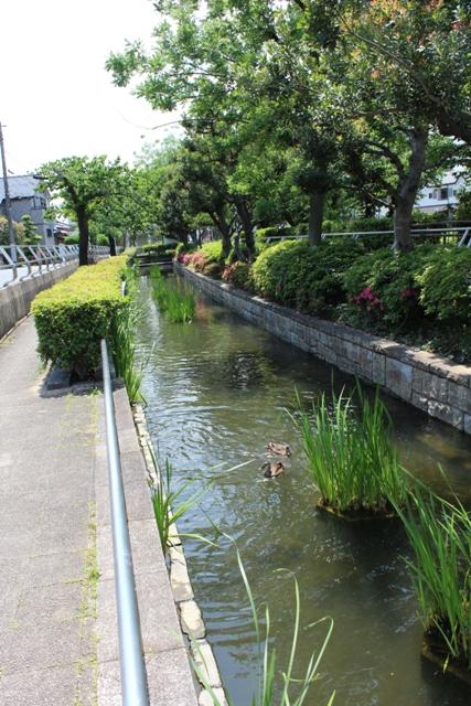 見沼親水3